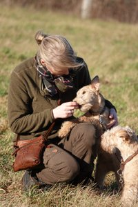 Beards and Tails Lakeland Terrier